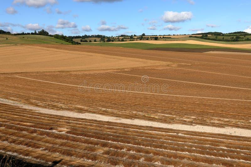 Kornfält efter skörd arkivfoto