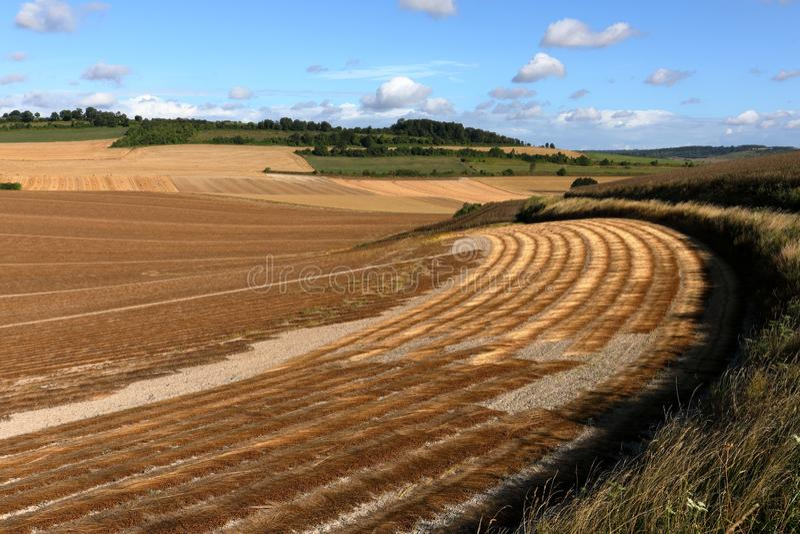 Kornfält efter skörd royaltyfri fotografi