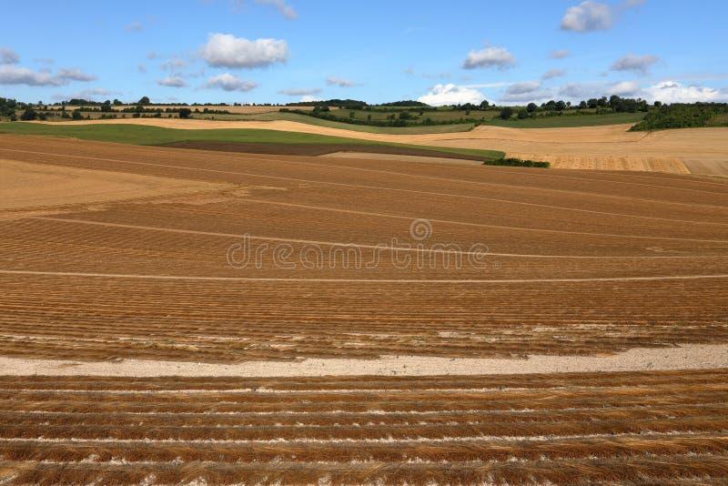 Kornfält efter skörd royaltyfri foto