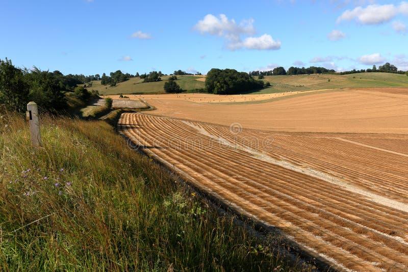 Kornfält efter skörd arkivbild