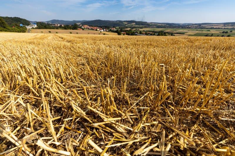 Kornfält efter skörden på Herleshausen i Tyskland arkivfoton