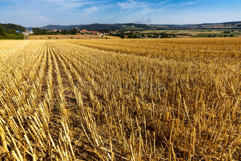 Kornfält efter skörden på Herleshausen i Tyskland arkivbilder