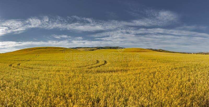 Kornfält i Navarre royaltyfri foto