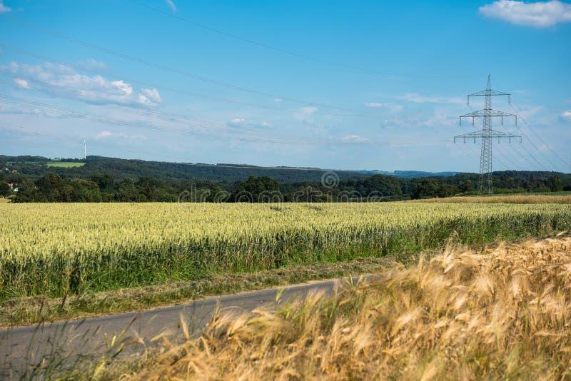 Kornfält och kraftledning i ljust väder i natur fotografering för bildbyråer