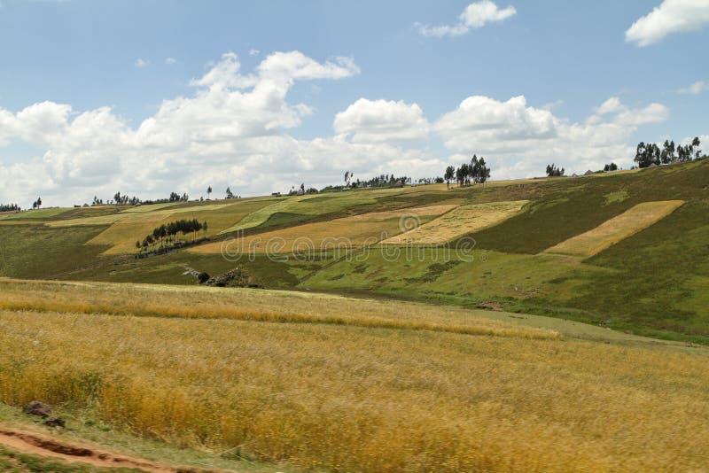 Kornfält och landskap i balbergen av Etiopien arkivfoton