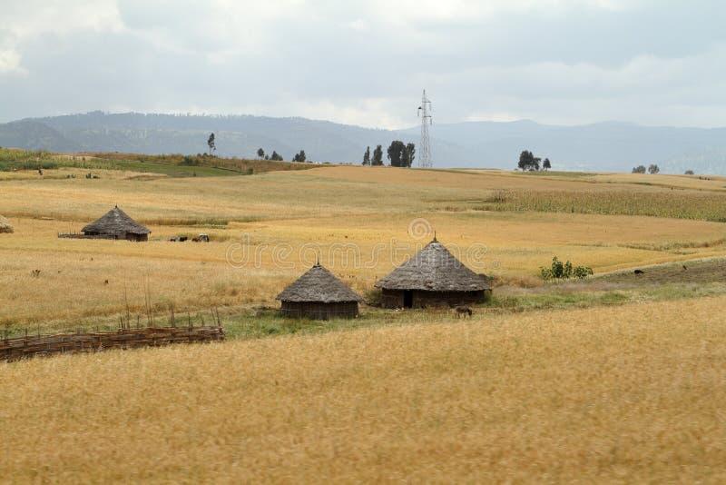 Kornfält och landskap i balbergen av Etiopien royaltyfri fotografi