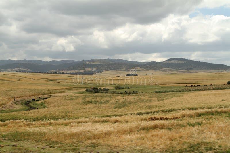 Kornfält och landskap i balbergen av Etiopien royaltyfri foto