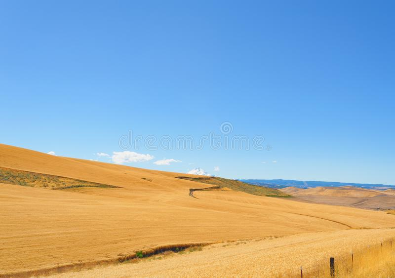 Kornfält och Mt huv arkivbild