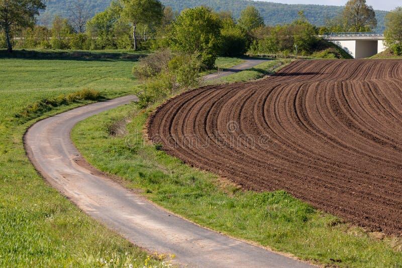 Kornfält och sådd i vår royaltyfri foto