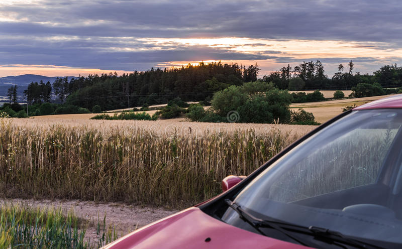 Kornfält på solnedgången och bilen arkivfoton