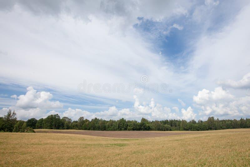 Kornfält som omges av skogen arkivfoto