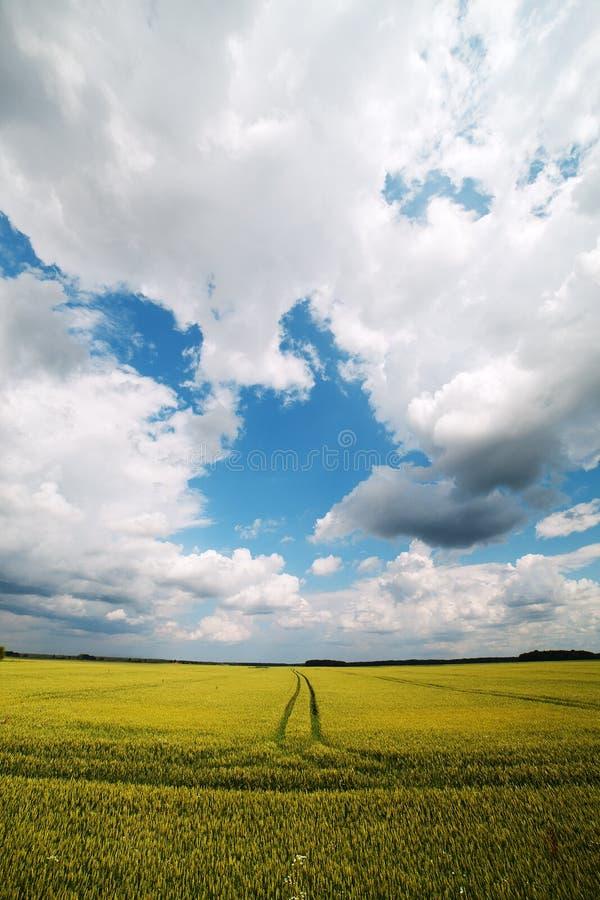 Download Kornfeld. stockfoto. Bild von nave, himmel, weide, horizont - 27726850