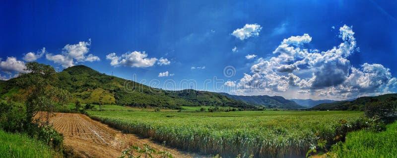 Korngebied en hemel stock fotografie