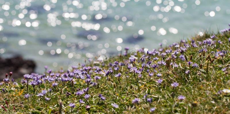 Kornische Clifftop-Wildflowers stockbilder