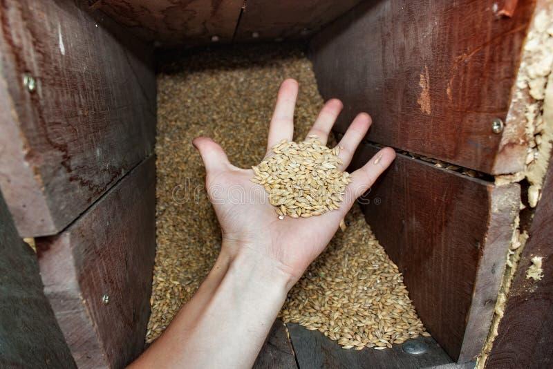 Kornkorn för ölproduktion arkivfoto