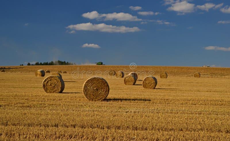 Kornskörden i Europa, guld- sugrörfält med baler av sugrör arkivbilder