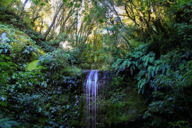 Korokupu spada w depp Nowa Zelandia lesie zdjęcie royalty free