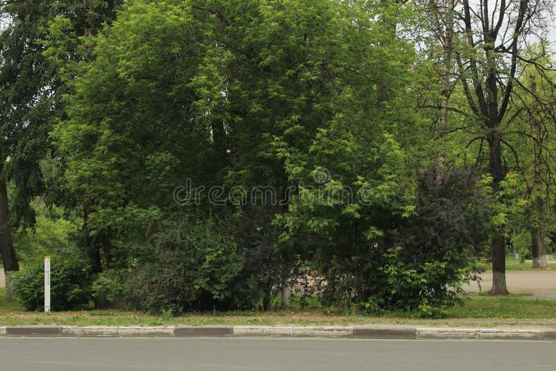 Korolyov går Kostino område Makarenko gata Tr?d royaltyfria bilder