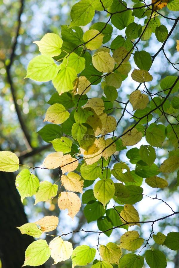 koron drzewa fotografia royalty free