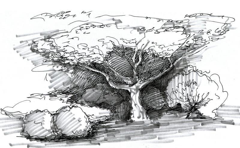 Korona drzewo w krajobrazowym projekcie miasto parki royalty ilustracja