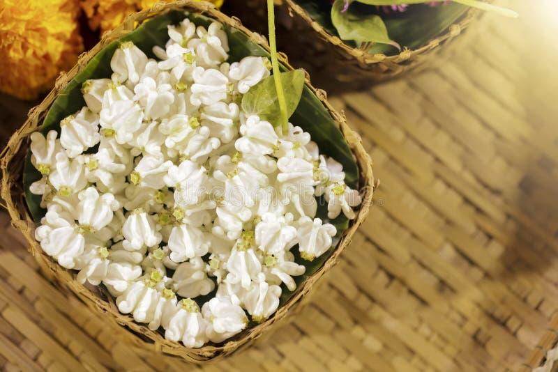 Korona kwiaty lub gigantyczna indyjska trojeść w koszu zdjęcia stock