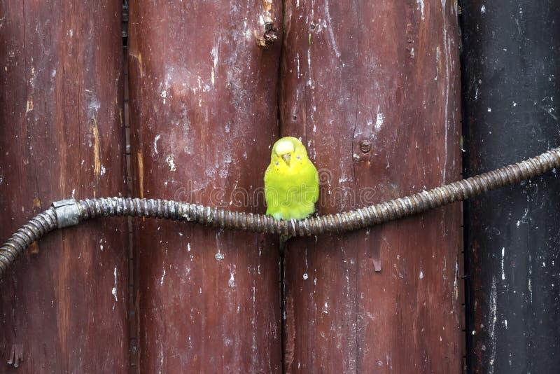 Koronujący Amazon przy Lagunas De Montebello parkiem narodowym zdjęcia stock