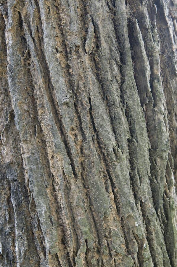 korowata linia wzoru drzewo zdjęcia royalty free
