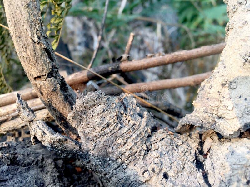 Korowatego drzewa tła naturewood obrazy royalty free