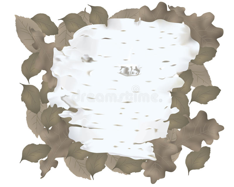korowatej brzozy odosobniony biel ilustracja wektor