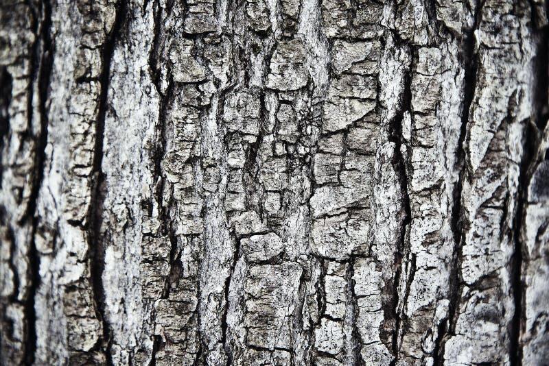 korowaty drzewo zdjęcie stock