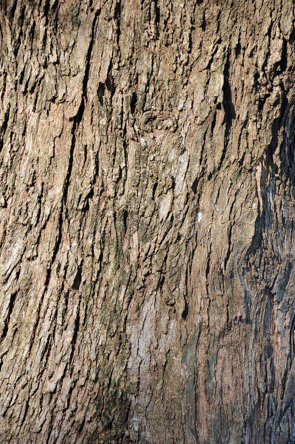 Korowaty drzewo obrazy royalty free