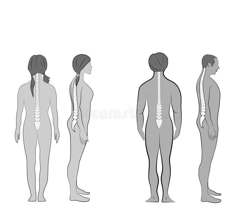 Korrekte Ausrichtung des menschlichen Körpers in der stehenden Lage für gute Persönlichkeit und gesund vom Dorn und vom Knochen G stock abbildung