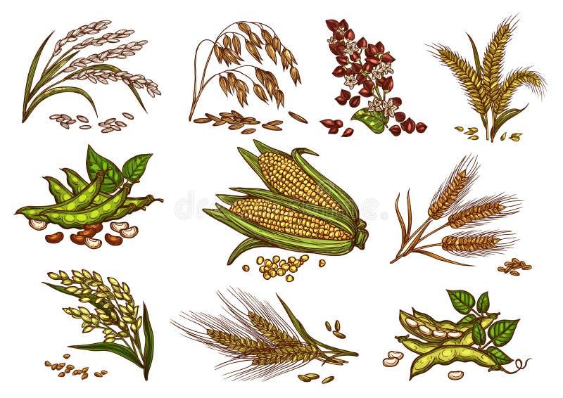 Korrel en graangewassenvector geïsoleerde pictogrammen stock illustratie