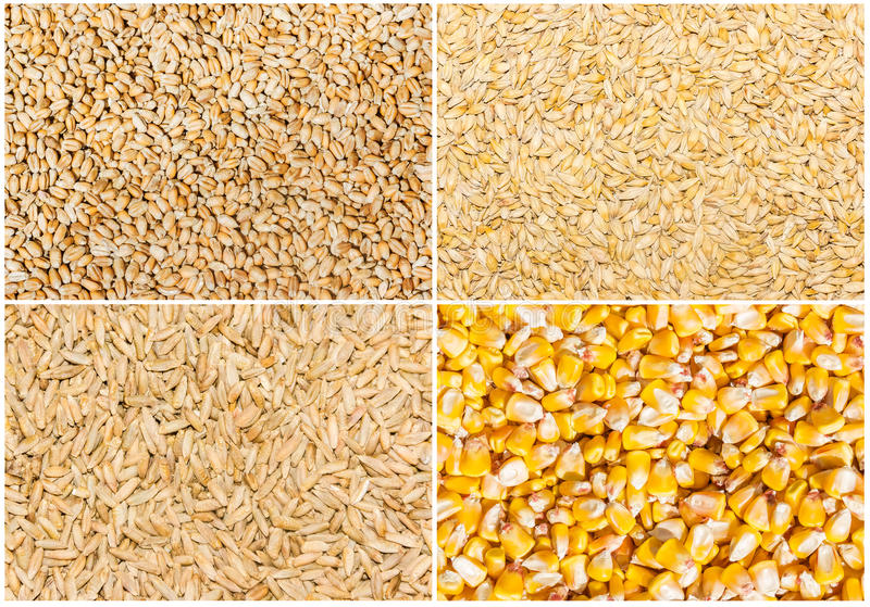 Korrel van tarwe, gerst, rogge en graan stock foto's