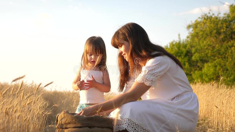 Korrel van tarwe in handen van kind de moeder en weinig kind spelen met korrel in zak op een tarwegebied Baby girl royalty-vrije stock foto's
