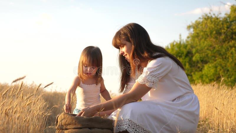 Korrel van tarwe in handen van kind de moeder en weinig kind spelen met korrel in zak op een tarwegebied Baby girl stock afbeeldingen