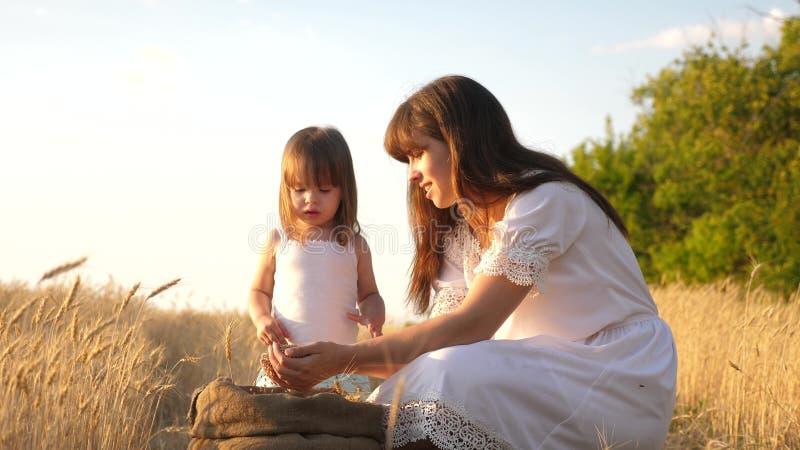 Korrel van tarwe in handen van kind de moeder en weinig kind spelen met korrel in zak op een tarwegebied Baby girl royalty-vrije stock foto