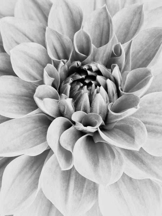 Korrelige zwart-wit bloem stock afbeelding