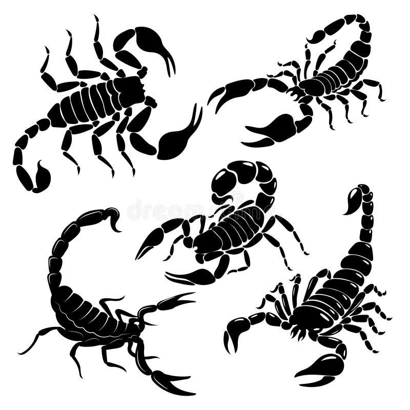 Korruptionsuppsättning En samling svarta och vita stiliserade skorpioner Vektorbild av giftiga insekter Tattoo vektor illustrationer