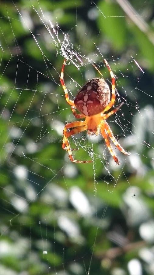 korsa dess spindelrengöringsduk royaltyfri fotografi