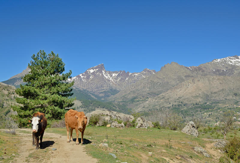 Korsikankor i bergpasserandet arkivfoto