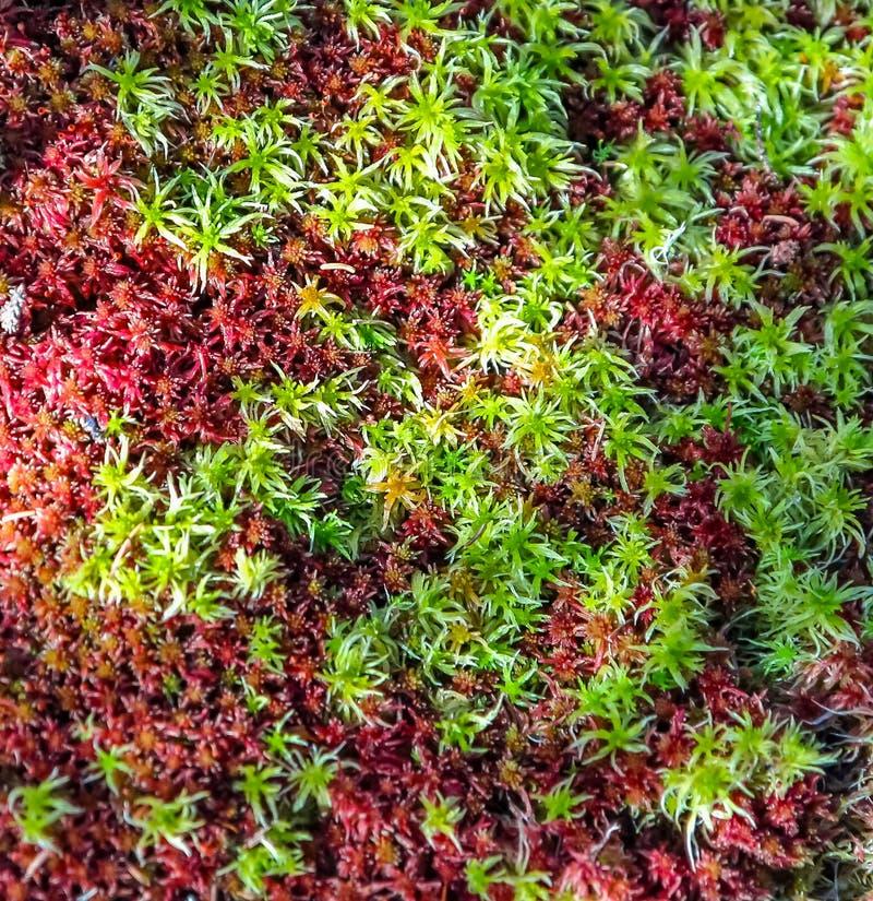 Korstmosbloemen bij Zeven Dalingenpark stock afbeeldingen