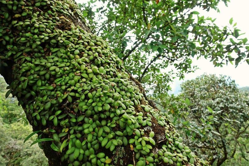 Korstmossen, mossen en flora in natuurlijk regenwoud stock fotografie