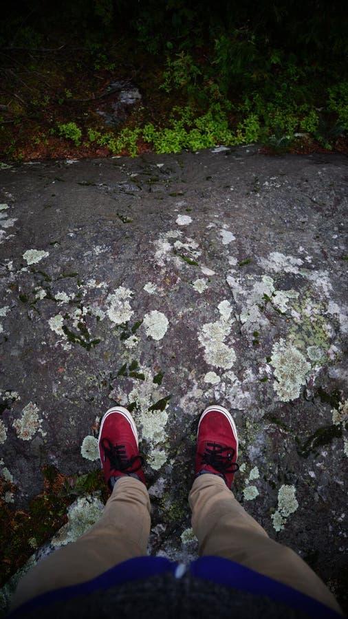 Korstmossen op een rots royalty-vrije stock foto's