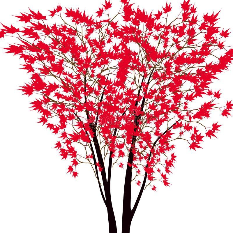 Kort med höstlönnträdet Träd för röd lönn i mitt japansk lönnred royaltyfri illustrationer