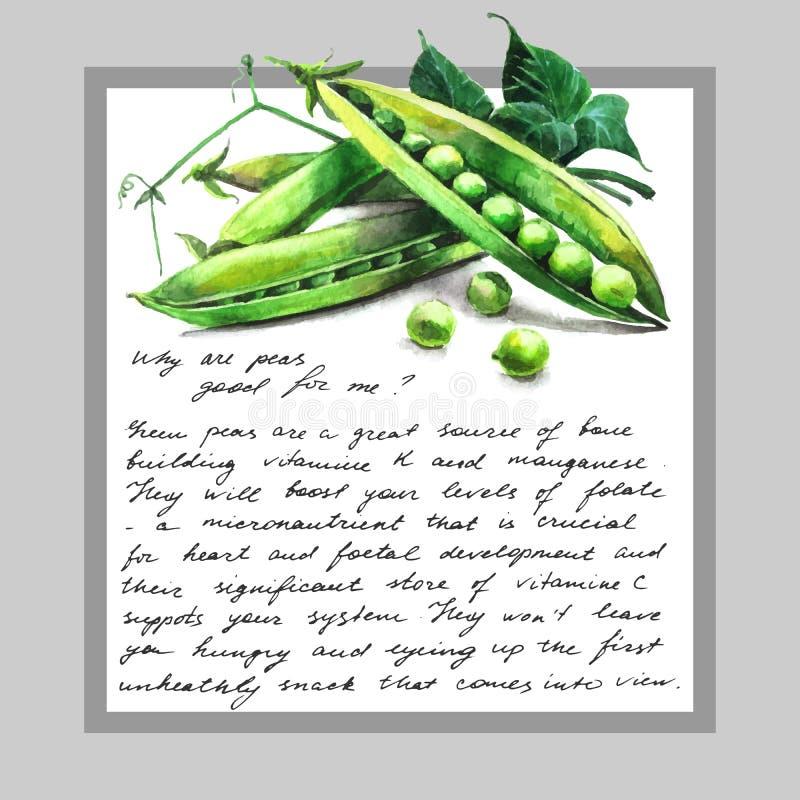 Kort med vattenfärg hand-dragen gröna ärtor och text stock illustrationer
