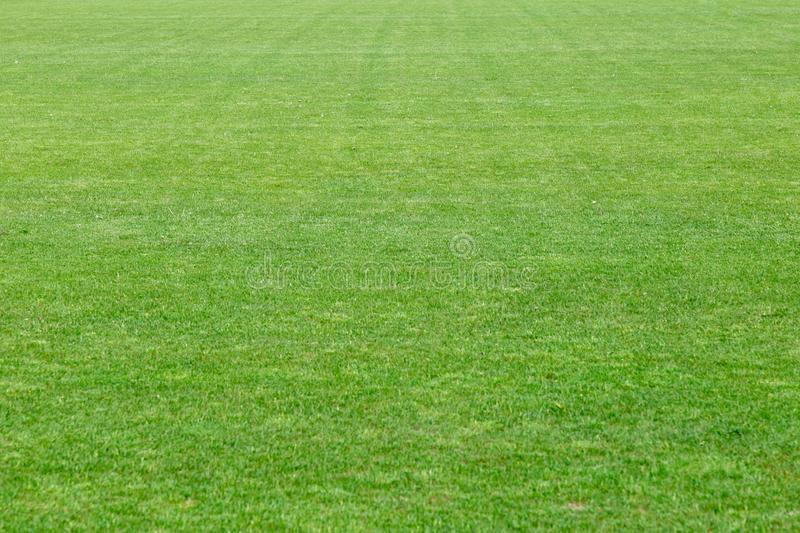 Kort naturlig brunn-ansad grön gräsmatta för snitt från ett nytt gräs Stort fält långsiktigt Skjutit horisontal arkivbild