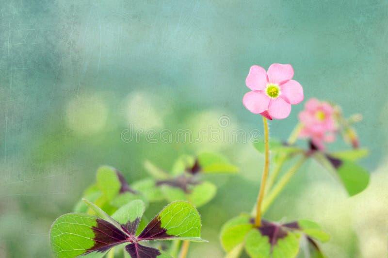 Kortet för moderdagen med rosa färger blommar på grungebakgrund royaltyfria foton
