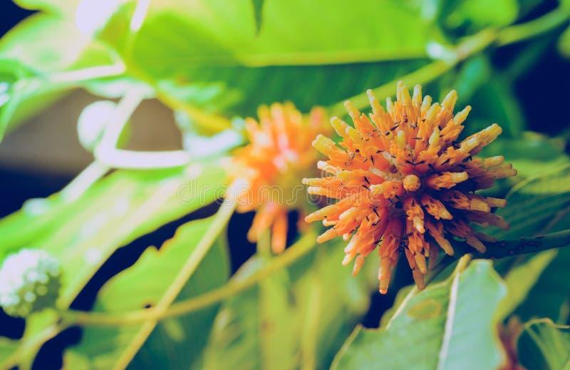 Korth stugablommor som växer på objen för naturlig tillväxt för träd` s royaltyfri bild