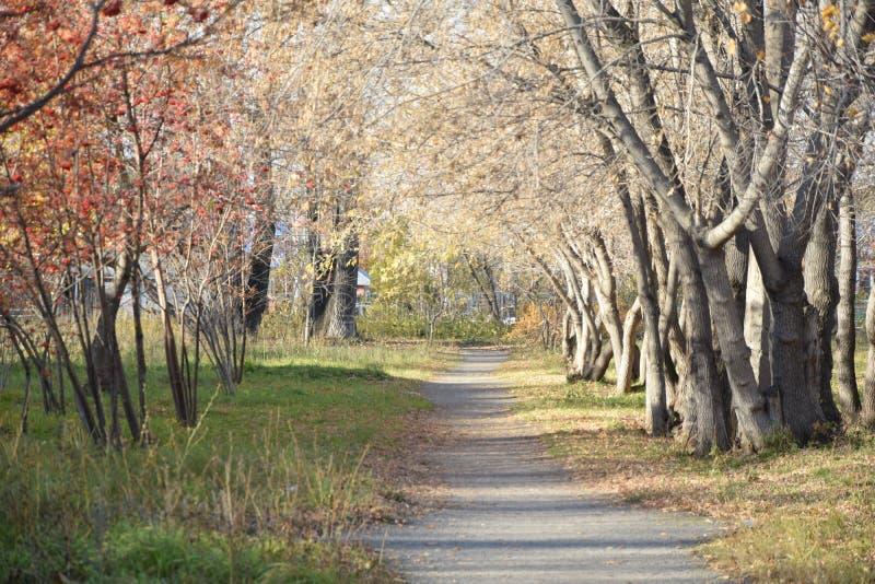 Korytarz drzewa Jesień obraz stock